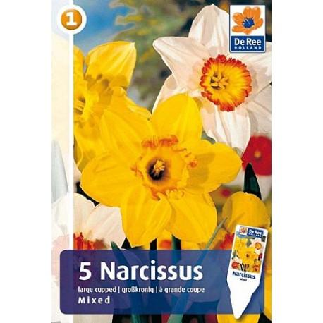 Луковицы Нарцисса смесь