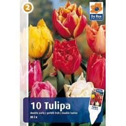 Луковицы Тюльпана смесь ранних махровых