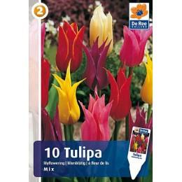 Луковицы Тюльпана Смесь Лилиецветных