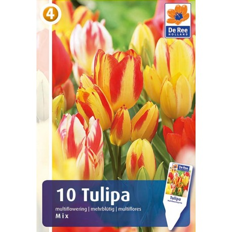 Луковицы Тюльпана Смесь многоцветковых сортов