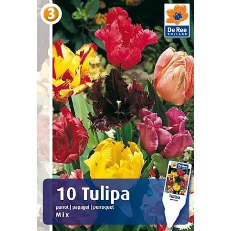 Луковицы Тюльпана смесь попугайных