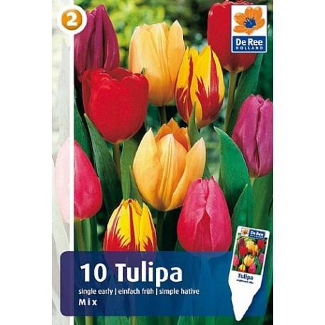 Луковицы Тюльпана Простые Ранние