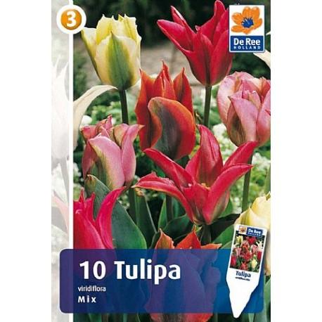 Луковицы Тюльпана Смесь Зеленоцветковх