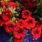 Ред Девил