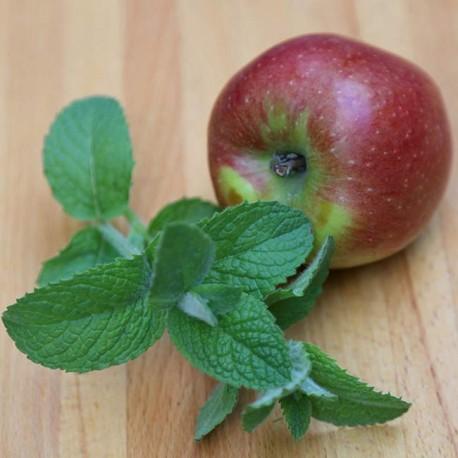 Рассада Мяты яблочной