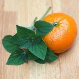 Рассада Мяты Оранж
