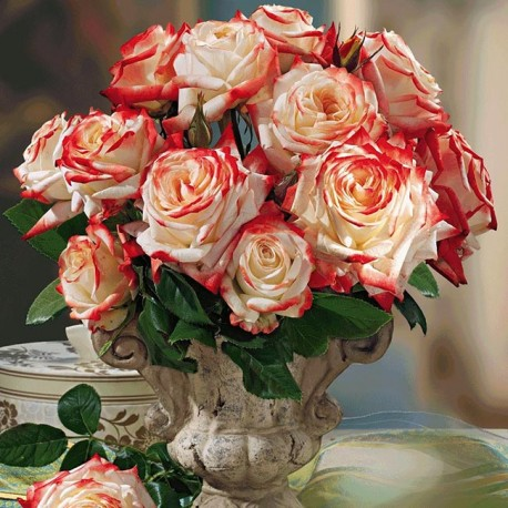 Саженцы розы Императрица Фарах