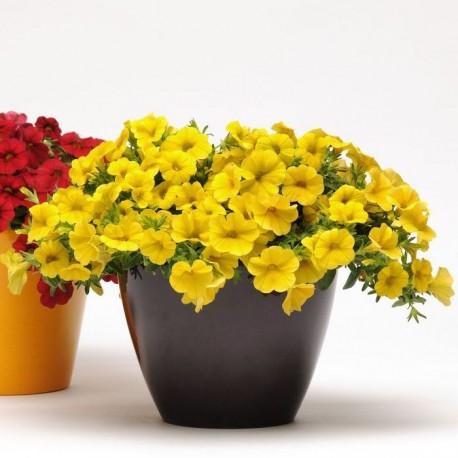 """Калибрахоа. Нажмите, чтобы выбрать Цвет!: """"Yelow"""""""