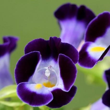 Торения. Нажмите, чтобы выбрать Цвет!: Blue Deep